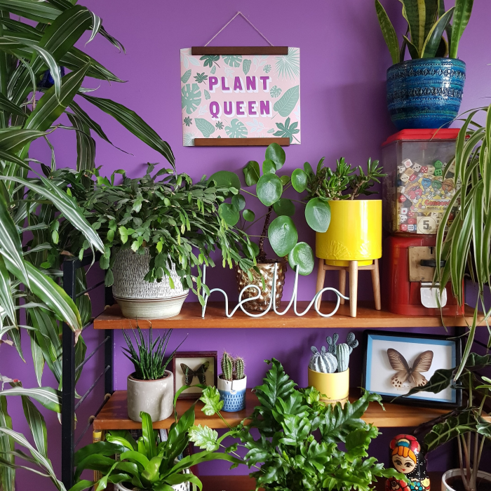 Plant Queen Banner in home setting