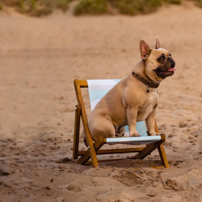 Customise pet deckchair
